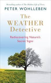 weather detective UK split tree